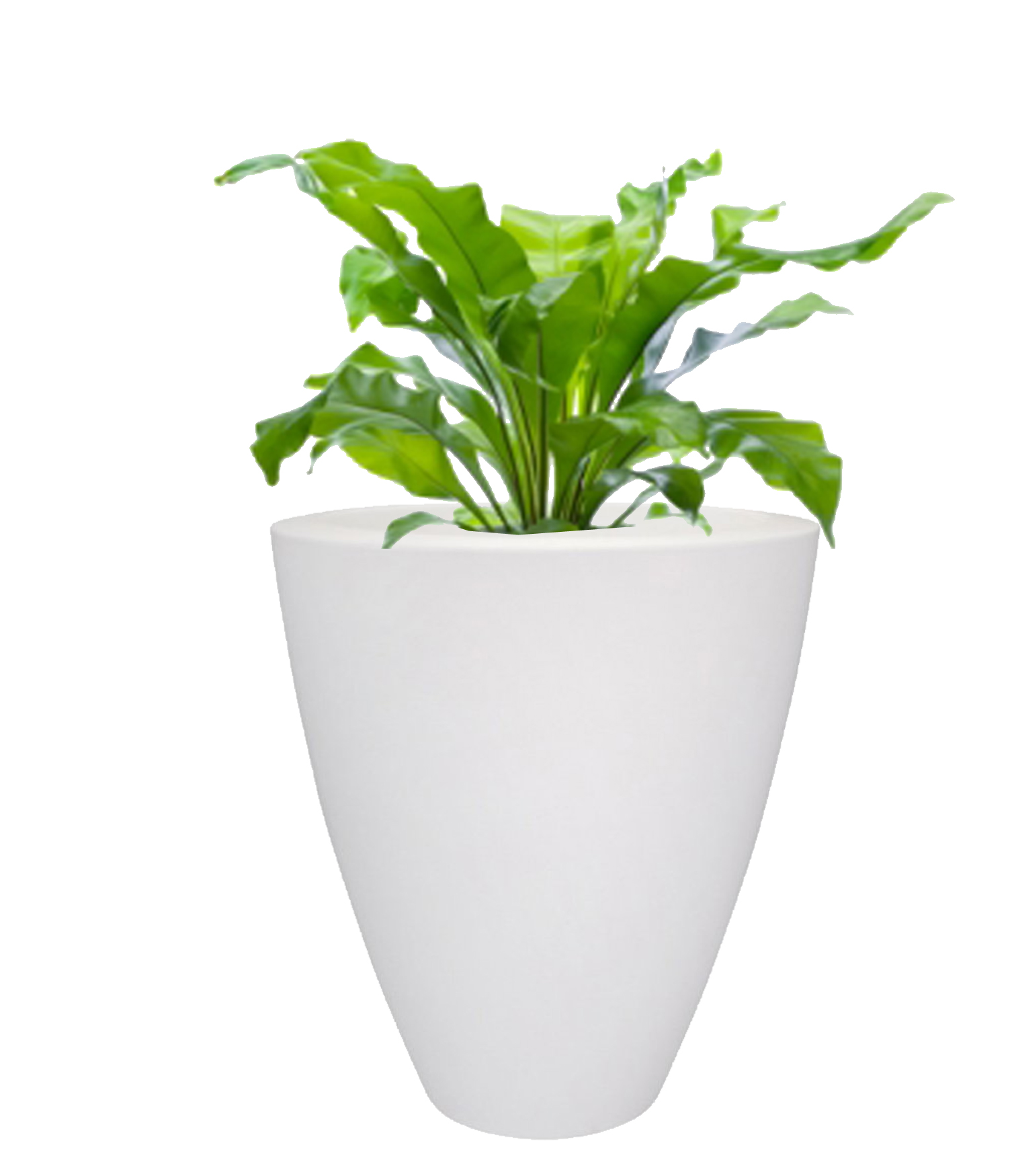 Des plantes s lectionn es pour vous nature v g tale for Site de plante