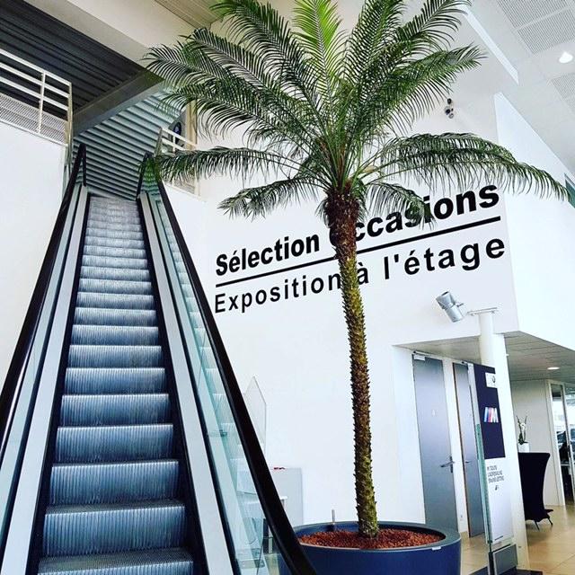 Installation de vos plantes dans vos espaces de travail ou hall d'entrée - Nature Végétale