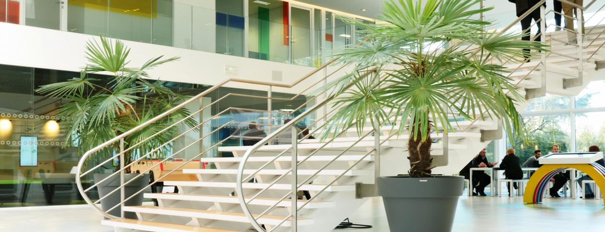 Location de plantes pour entreprise Lille