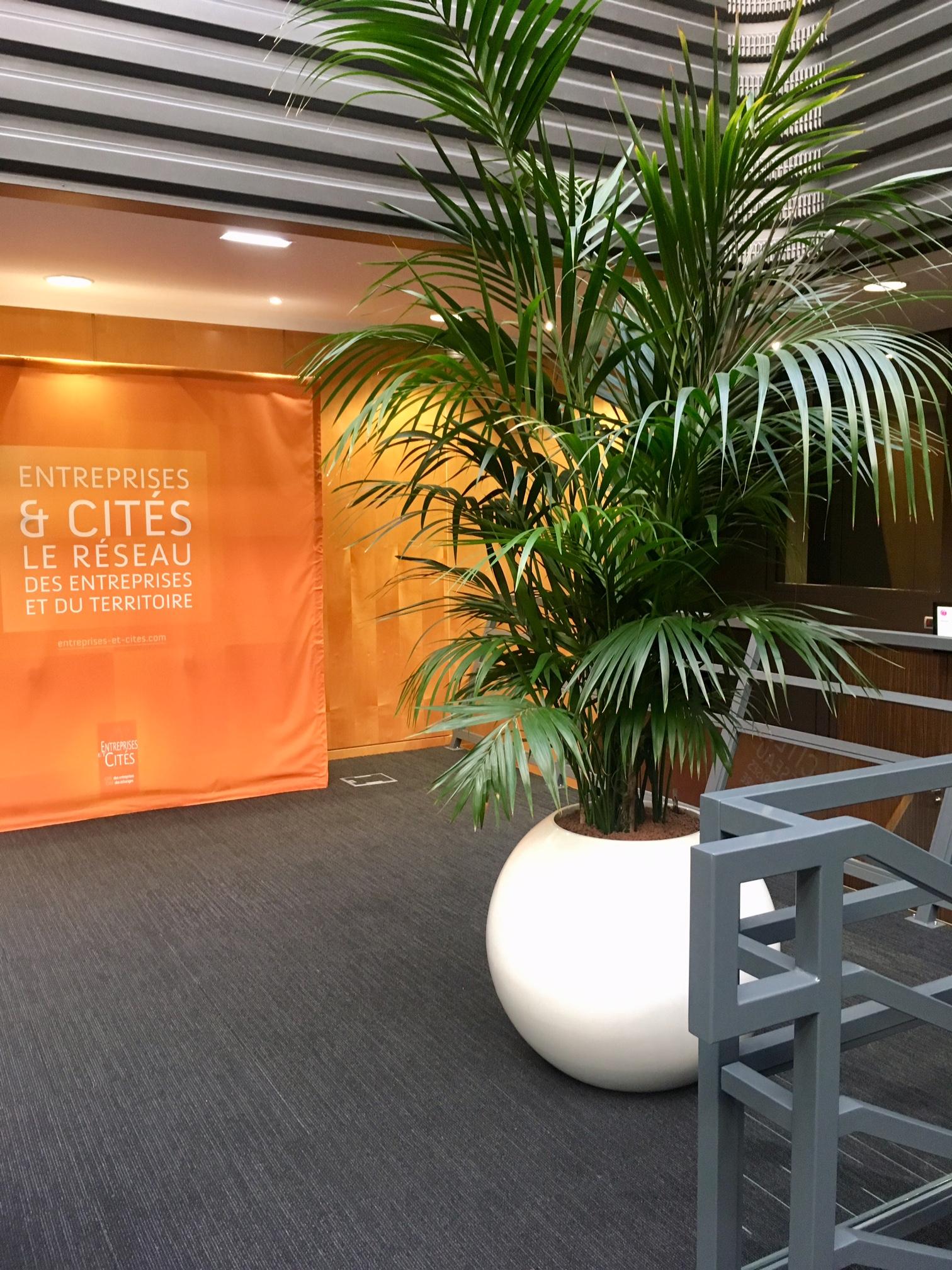 location de plantes pour la cit nature v g tale. Black Bedroom Furniture Sets. Home Design Ideas