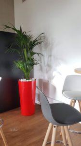 Location de mobilier avec plantes pour le bien-être de vos collaborateurs