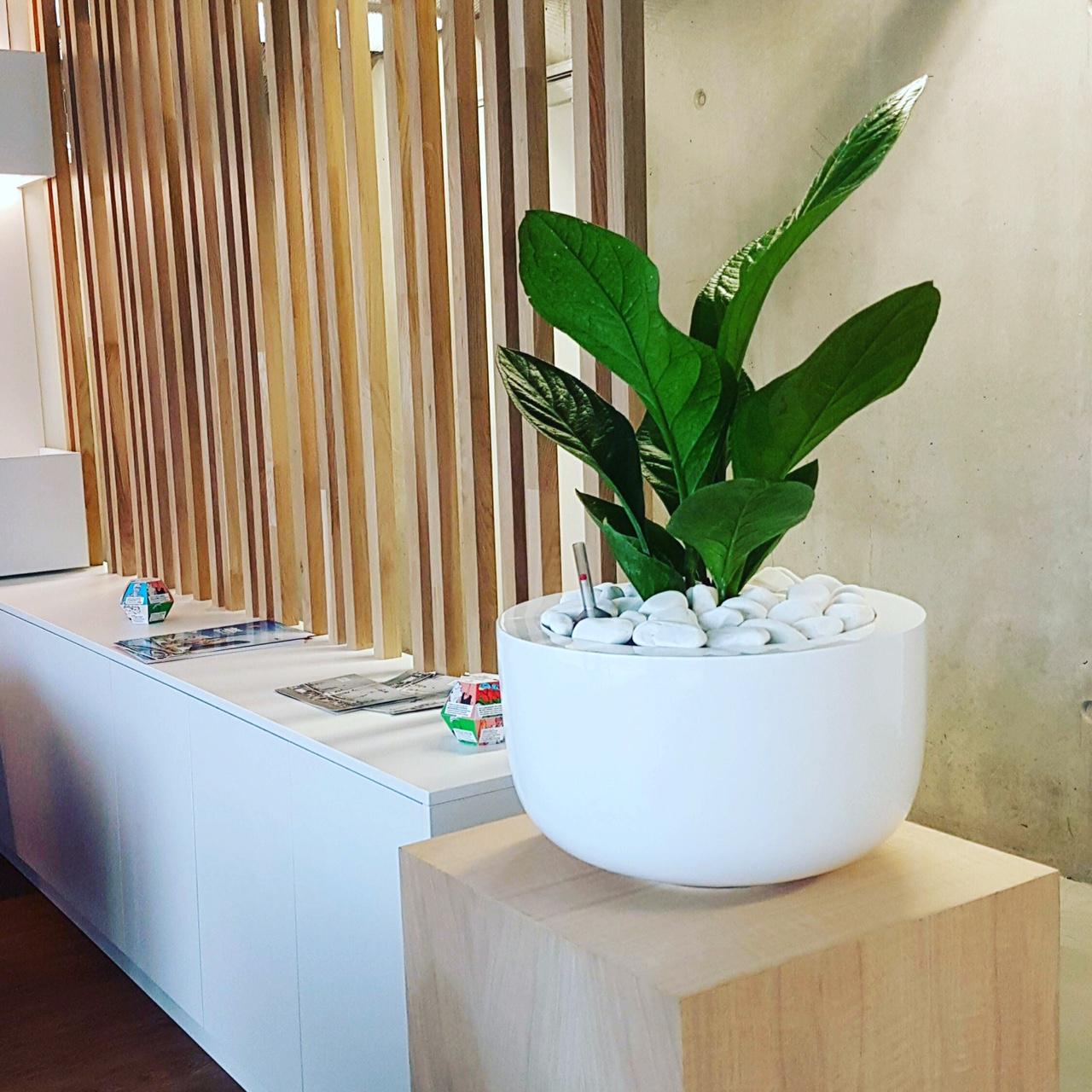 Location de plantes et pots pour habiller vos locaux et espaces de travail