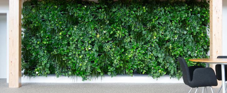 Murs végétaux sur les murs de votre entreprise. Laissez entrer la nature dans votre société