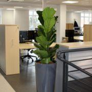 Location de pots et plantes pour votre établissement professionnel - Nature Végétale
