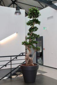 Sublimez vos esapces par la location de plantes et arbres - Nature Végétale