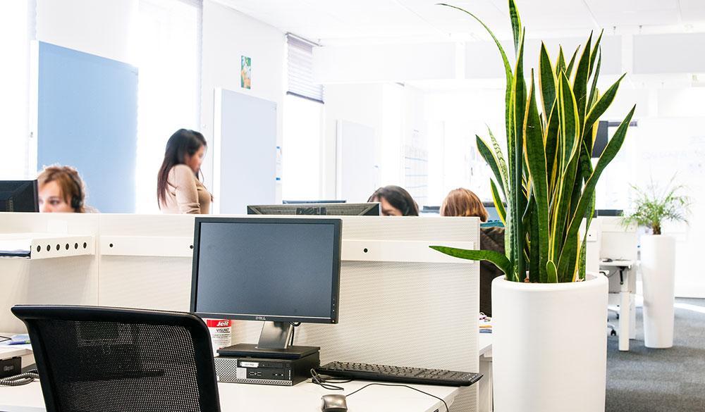 Agencer vos bureaux avec des plantes pour le bien-être de vos collaborateurs - Booking