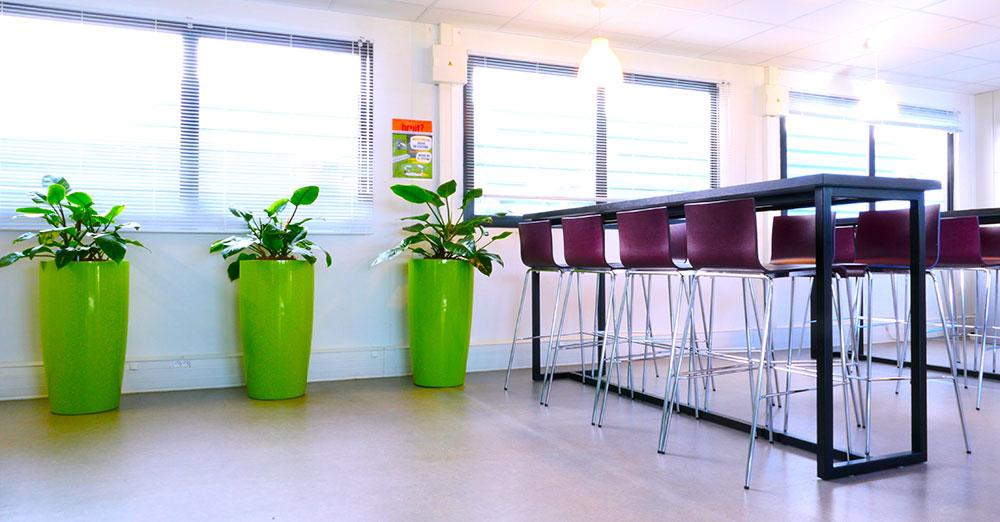 Agencer et décorer vos espaces de travail par les plantes dans votre entreprise