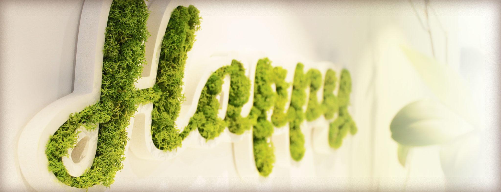 Lettres mousse végétale