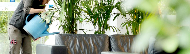 Entretien et Location de plantes pots pour votre entreprise Lille Paris