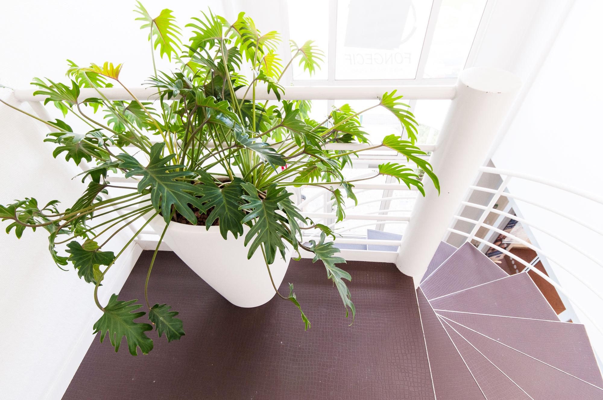plante palier
