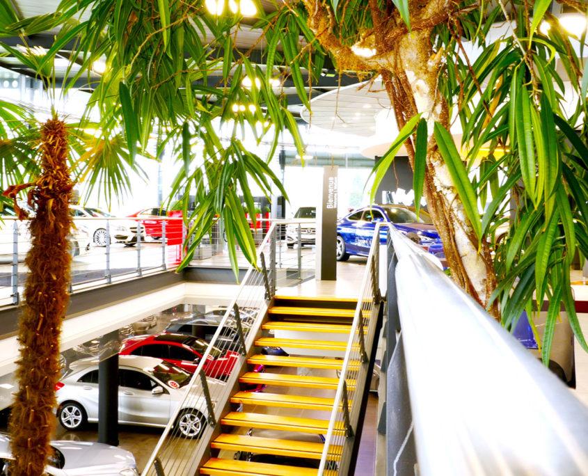 Location de plantes pour la concession BMW - Lille