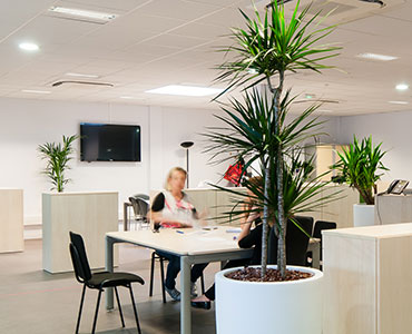 Location de plantes dans vos espaces entreprise - Voix du Nord
