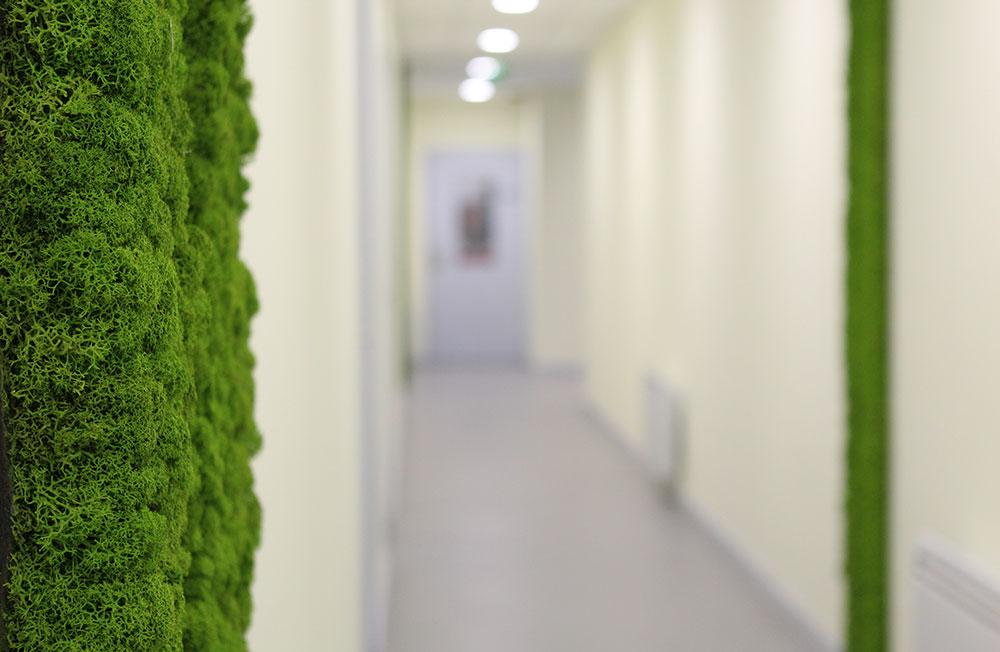 Mousse Végétale Naturelle - Espaces communs - Total Oleum Dunkerque