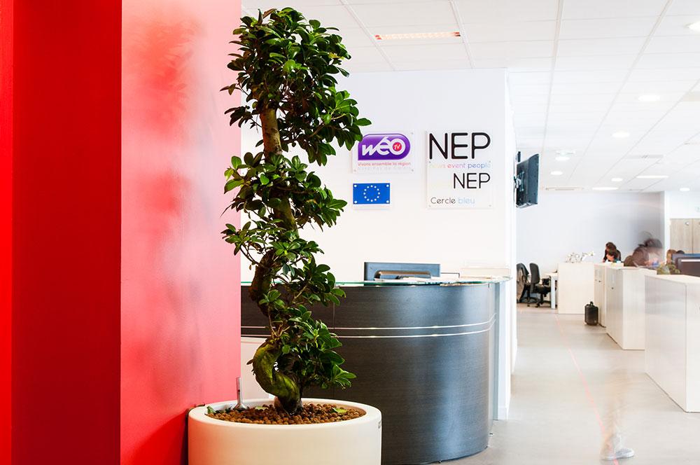 Aménagement de plantes dans vos espaces de travail - Voix du Nord