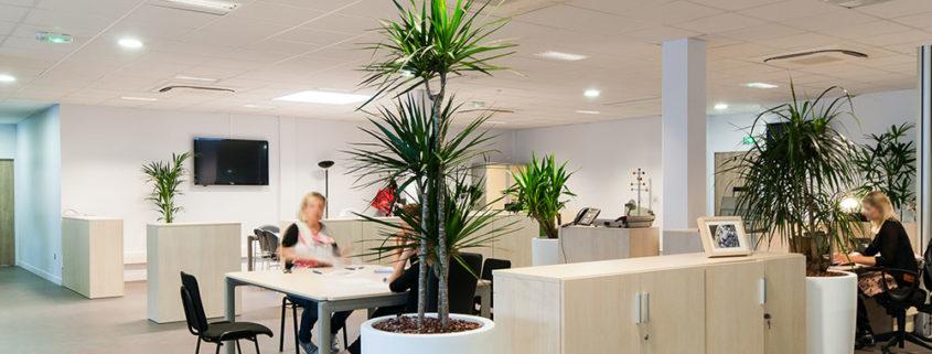 Agencement de plantes dans les bureaux de la Voix du Nord - Lille