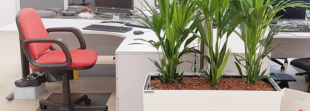 Jardinière et plantes dans les bureaux KSB - Sequedin