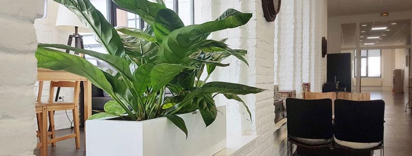 Plantes installées dans les espaces détente du Crédit Agricole - Roubaix