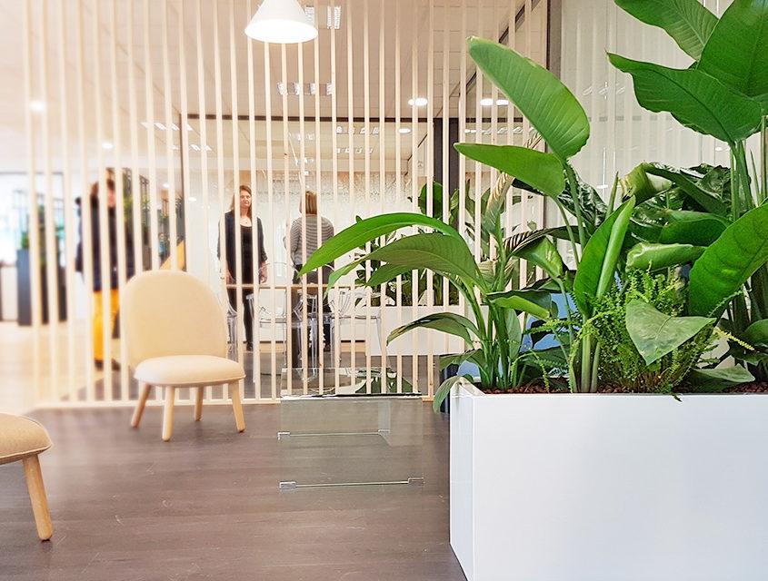Ambiance végétale dans les bureaux du Comité Régional de Tourisme - Lille
