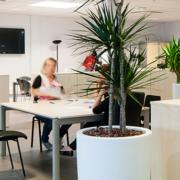 Location de plante pour le bien-être des salariés