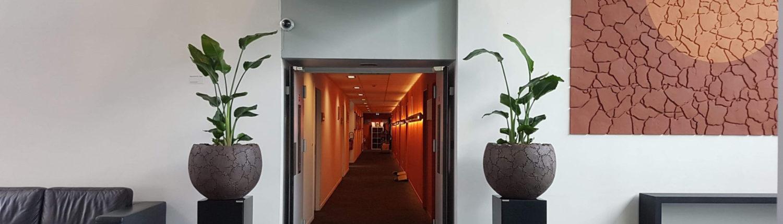 Location pot et plantes décoration végétale