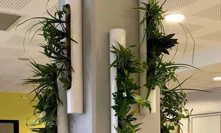 habillage mur végétal