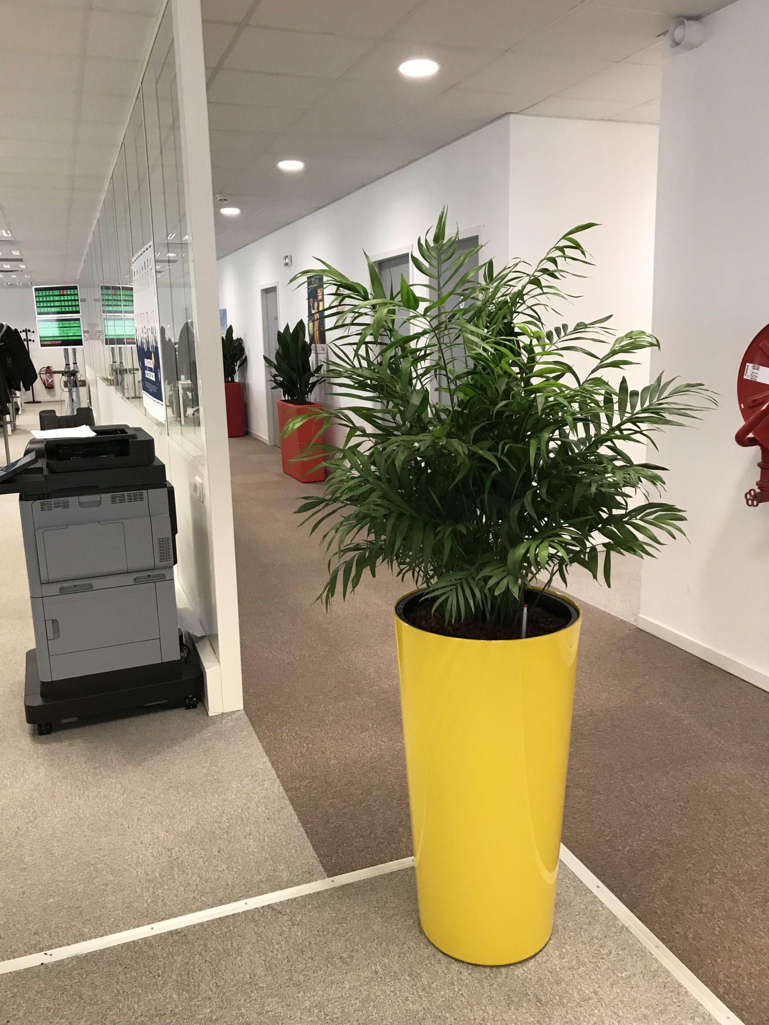 Pot avec plantes en location Lille Paris