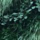 mur vegetal pour vos espaces de travail