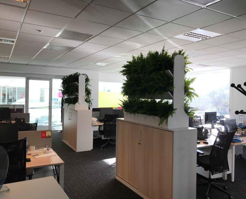 location de plantes pour vos bureaux