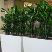 location plantes purifiantes Lille, Roubaix, Tourcoing, ...