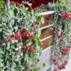 Plantes dépolluantes pour bureaux
