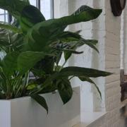 Locations de plantes dans votre espace de travail