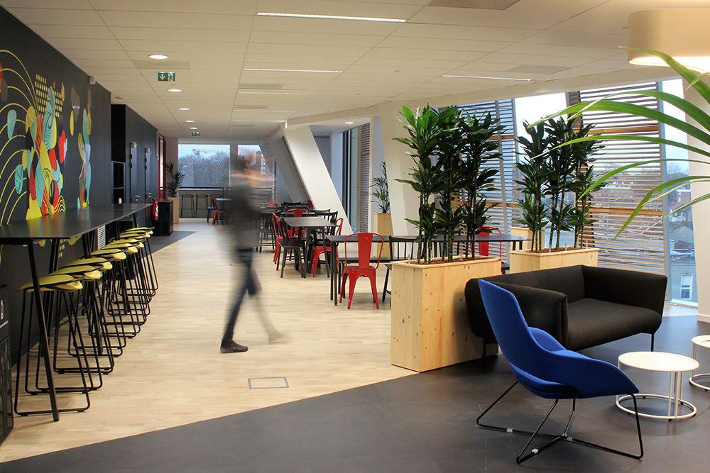 Location de plante pour vos espaces communs et bureaux sur Lille et sa métropole