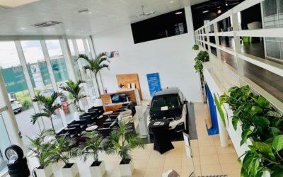 Location de plantes vertes pour entreprises