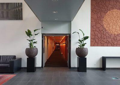 location pot plante hall entree lille