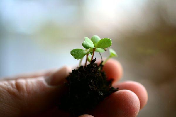 L'histoire de Nature Végétale Location de plantes et de mobilier