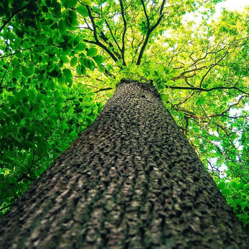 Démarches eco responsable nature végétale
