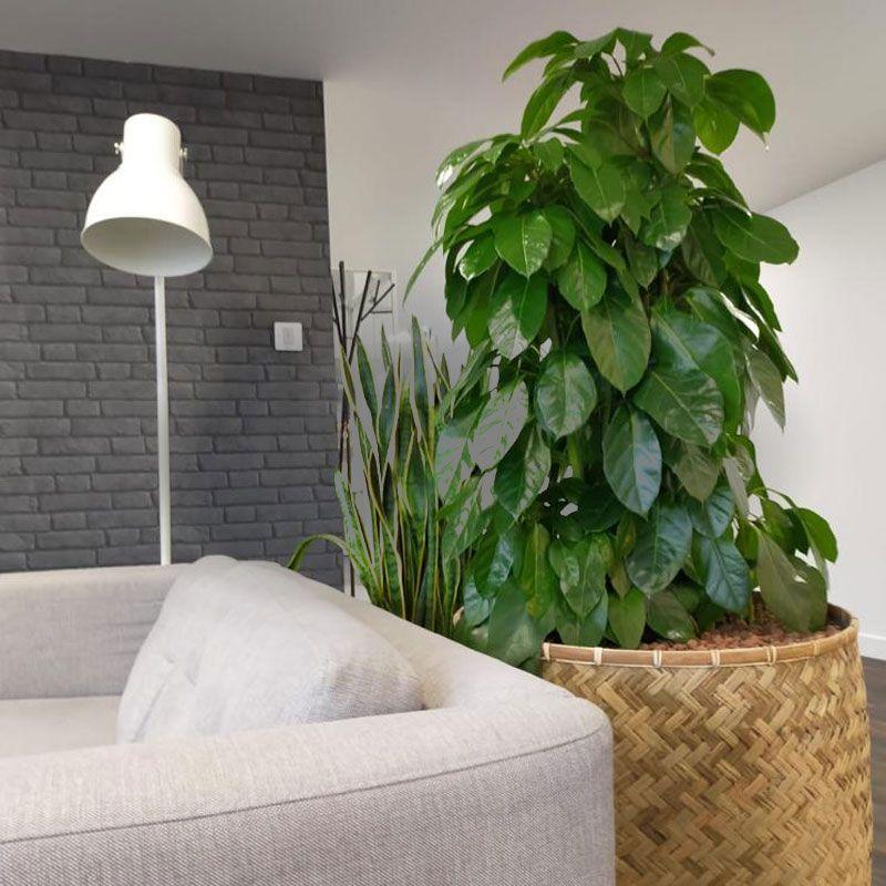 prestation végétale nature vegetale