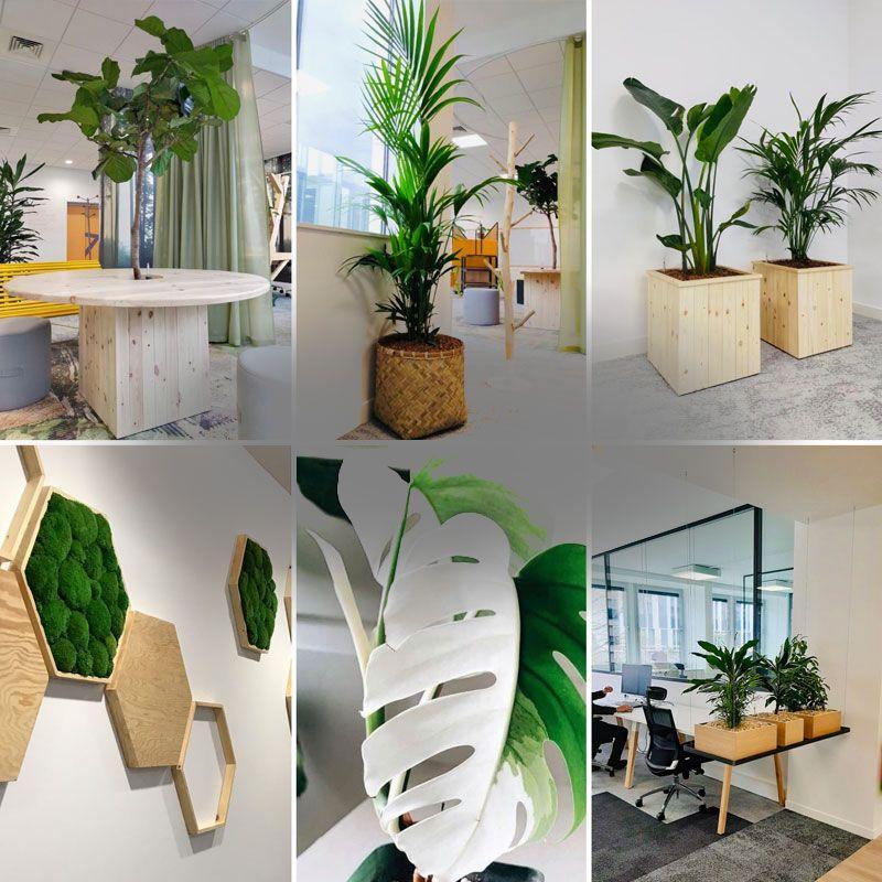 Réalisations nature végétale location plantes Lille Paris