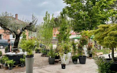 Déstockage de nos locations de plantes J-1