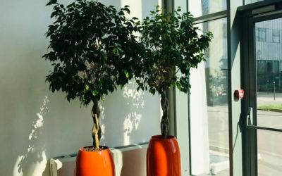 Location de mobilier végétal et location de plantes pour vos bureaux