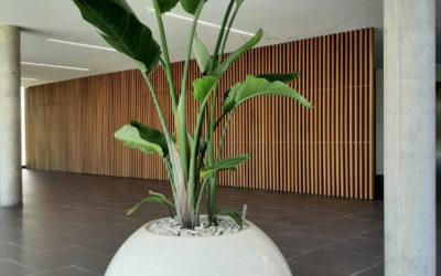 Location de végétaux pour vos espaces communs et bureaux sur Lille Paris