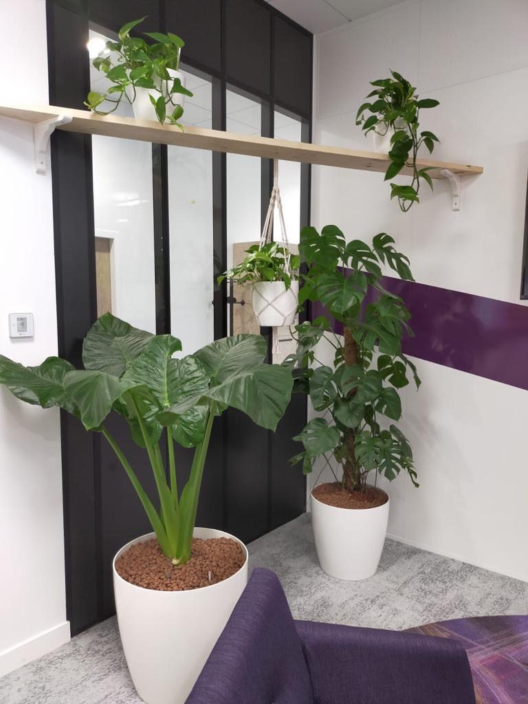 location de vegetaux pour bureaux