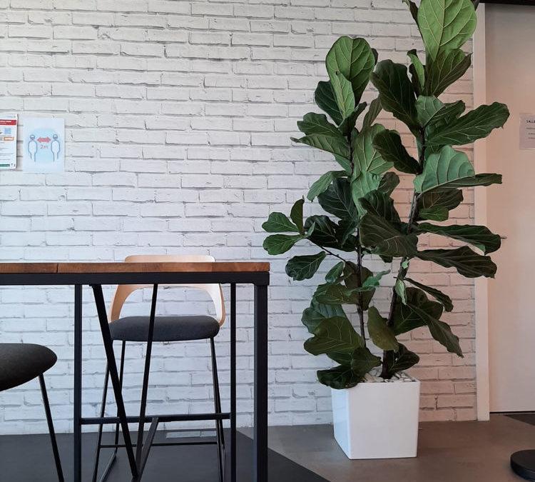 Paysagiste d'intérieur pour entreprises Lille Paris