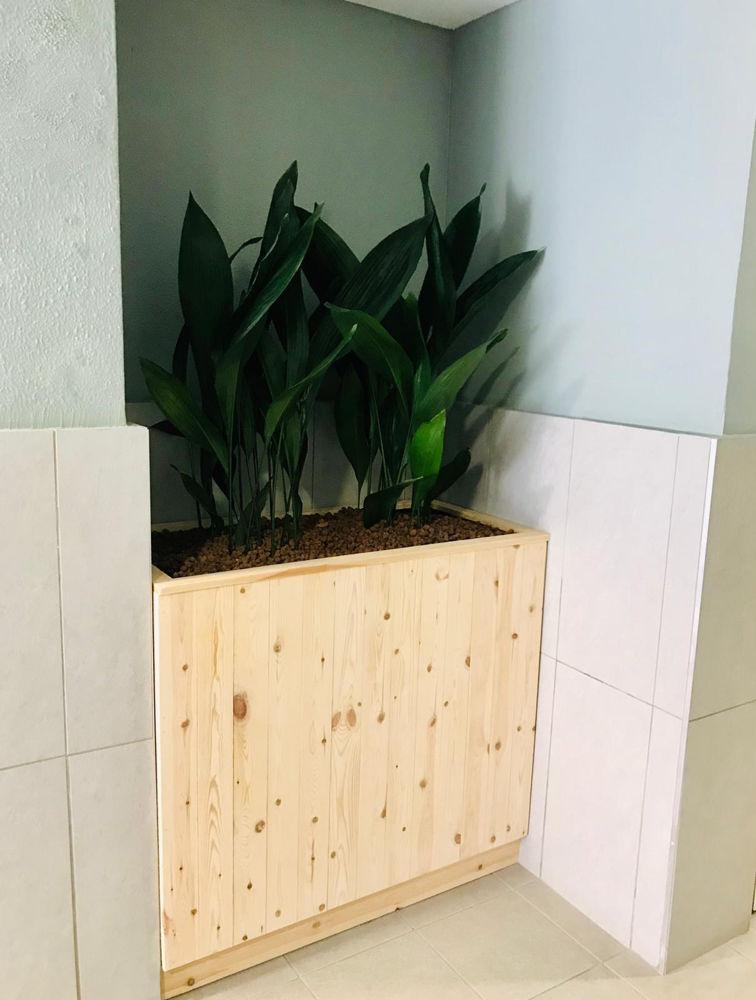plante et pot sur-mesure pour vos bureaux
