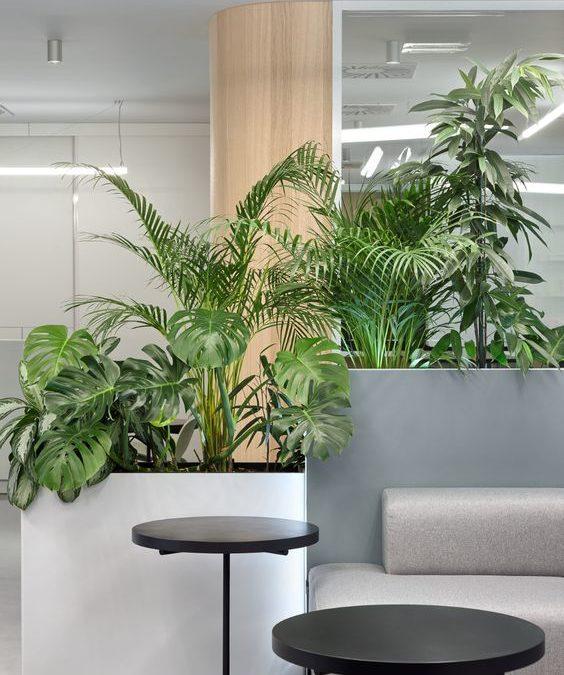 Décoration végétale pour aménager vos bureaux et espace de travail