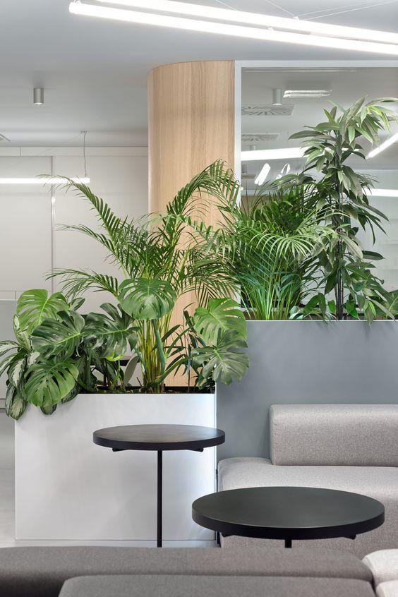 Décoration vegetale amenge bureaux