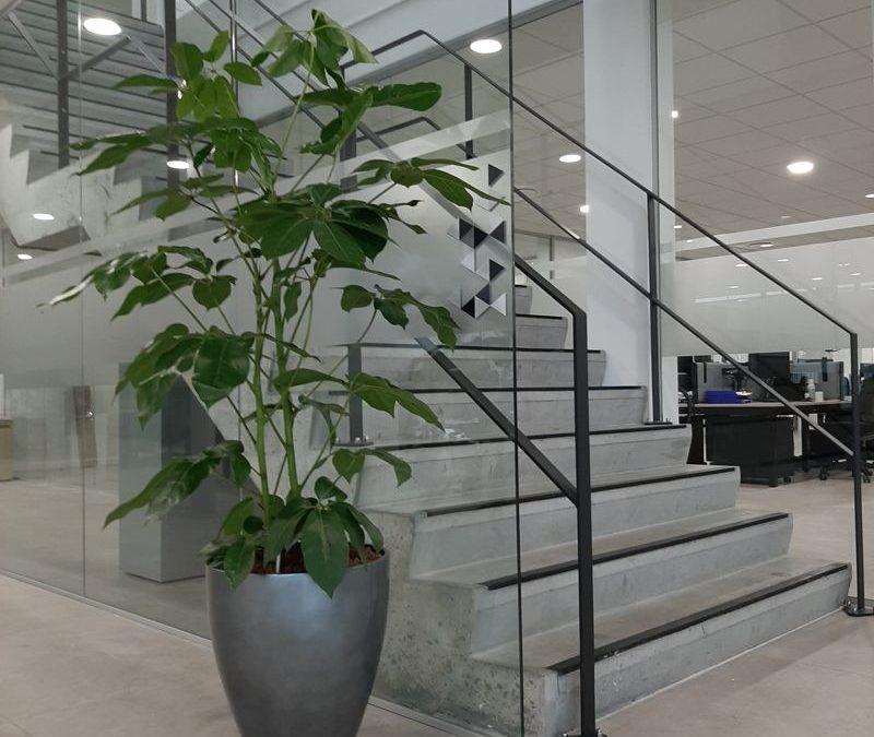 Nouvelle décoration végétale dans un nouveau bâtiment sur Roncq